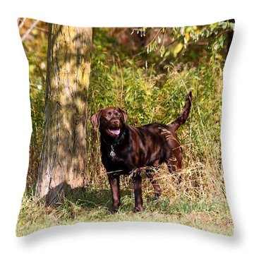 Chocolate Lab Cuteness Throw Pillow
