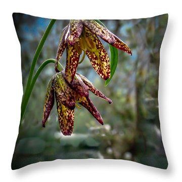 Chocolate Lily Throw Pillow by Robert Bales