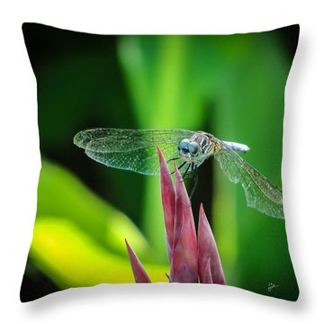 Chomped Wing Squared Throw Pillow by TK Goforth