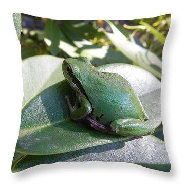 Chorus Frog On A Rhodo Throw Pillow by Cheryl Hoyle