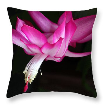 Christmas Cactus November 2014 1 Throw Pillow by Mary Bedy
