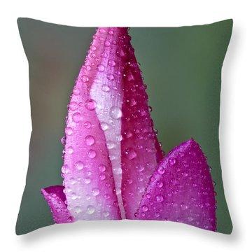 Christmas Cactus  Throw Pillow by Susan Candelario