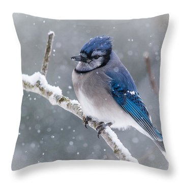 Christmas Card Bluejay Throw Pillow by Cheryl Baxter