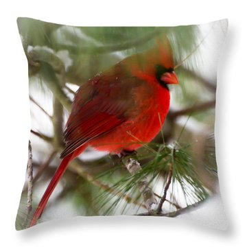 Throw Pillow featuring the photograph Christmas Cardinal by Kerri Farley