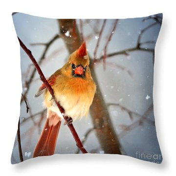 Northern Cardinal Snow Scene Throw Pillow