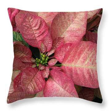 Throw Pillow featuring the photograph Christmas Flower by Tammy Espino