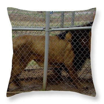 Christmas Lion Throw Pillow