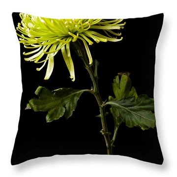 Throw Pillow featuring the photograph Chrysanthemum by Sennie Pierson