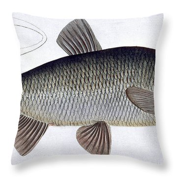 Chub Throw Pillow by Andreas Ludwig Kruger