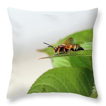 Cicada Killer Throw Pillow