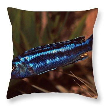 Cichlid Throw Pillow