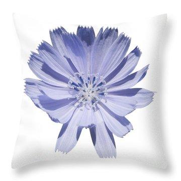 Cichorium Intybus Throw Pillow