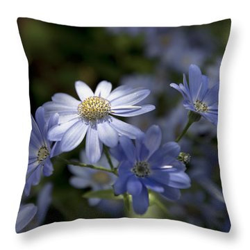 Cineraria  1217 Throw Pillow by Terri Winkler