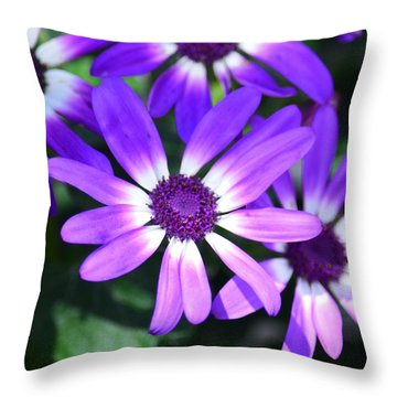 Cineraria Throw Pillow by Maria Urso