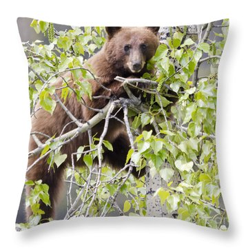 Cinnamon Beauty Throw Pillow