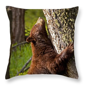 Throw Pillow featuring the photograph Cinnamon Boar Black Bear by J L Woody Wooden