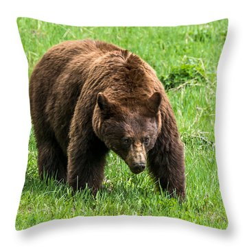 Throw Pillow featuring the photograph Cinnamon Boar In The Afternoon by Yeates Photography
