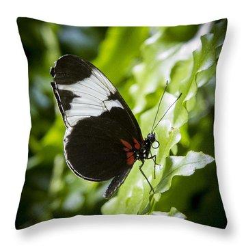Circle Throw Pillow by Jean Noren