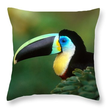 Citron-throated Toucan Throw Pillow by Art Wolfe