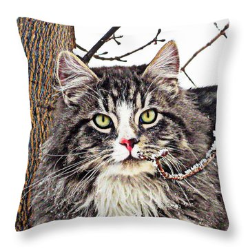 Throw Pillow featuring the photograph Clancy by Kathy Bassett