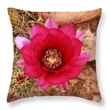 Throw Pillow featuring the photograph Claret Cup Cactus On Red Rock In Sedona by Alan Vance Ley