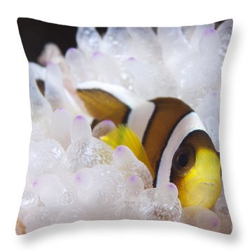 Clarks Anemonefish In White Anemone Throw Pillow by Steve Jones