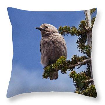 Clark's Nutcracker In A Fir Tree Throw Pillow by Jeff Goulden