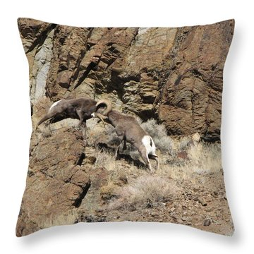 Clash Of The Titans Throw Pillow
