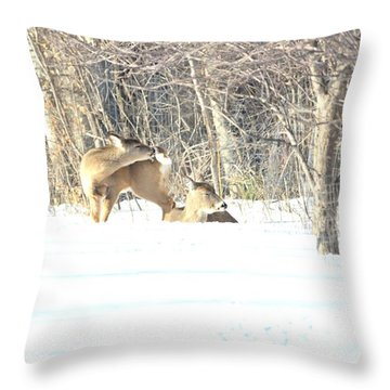 Cleaning Cockleburs On It's Tail Throw Pillow