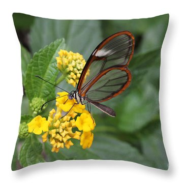 Clearwing Butterfly Throw Pillow