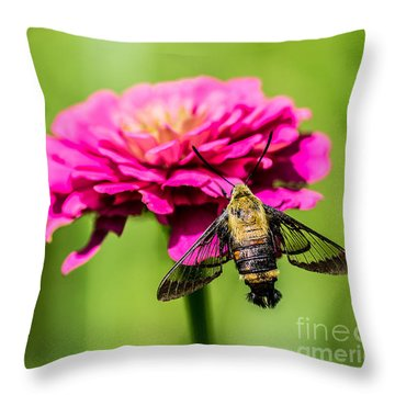 Clearwing Moth Throw Pillow by Debbie Green