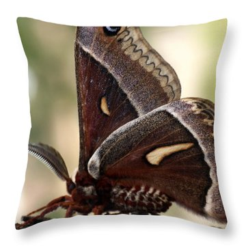 Clem The Moth Throw Pillow