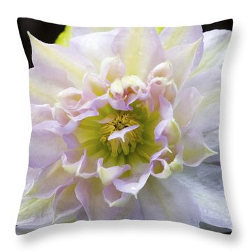 Clematis 'belle Of Woking' Throw Pillow