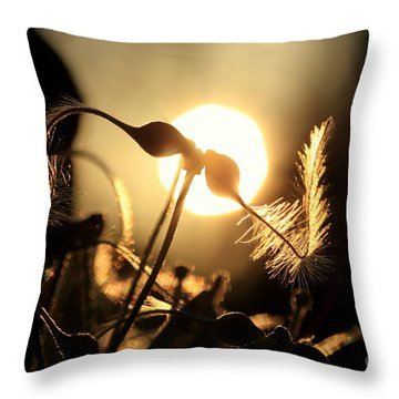 Clematis - Sunset Throw Pillow