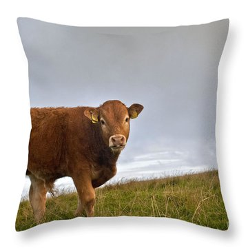 Cliffs Of Moher Brown Cow Throw Pillow