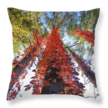 Climbing Colors Throw Pillow