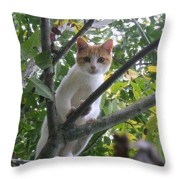Climbing Kitty Throw Pillow