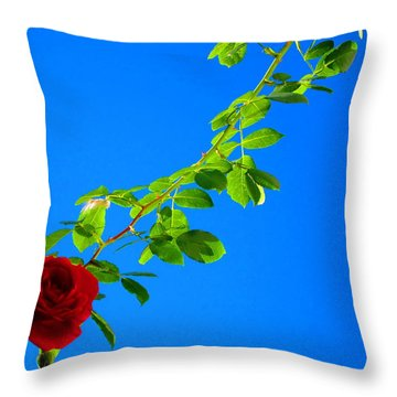 Climbing Rose Throw Pillow by Andreas Thust