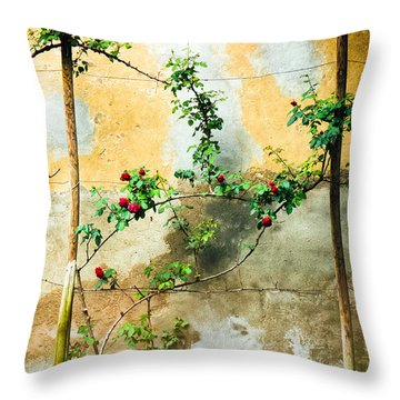 Throw Pillow featuring the photograph Climbing Rose Plant by Silvia Ganora