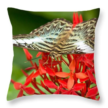 Clipper Butterfly Throw Pillow by Scott Carruthers