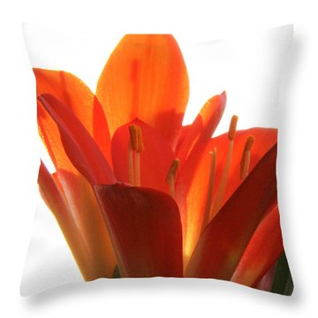 Throw Pillow featuring the photograph Clivia by Jivko Nakev