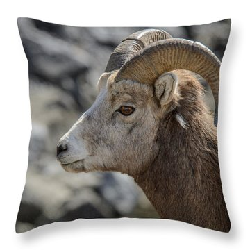Close Big Horn Sheep  Throw Pillow