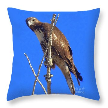 Hawk Close Up  Throw Pillow