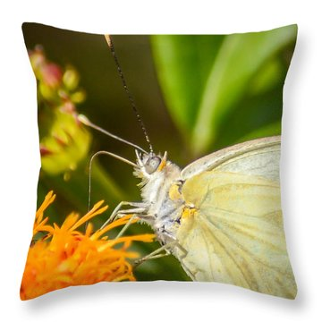 Butterfly Attracted To Mexican Flame Throw Pillow by Debra Martz