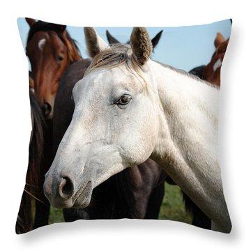 Close-up Herd Of Horses. Throw Pillow