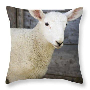 Close Up Of A Baby Lamb Throw Pillow