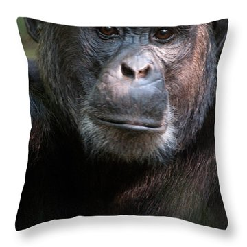 Close-up Of A Chimpanzee Pan Throw Pillow