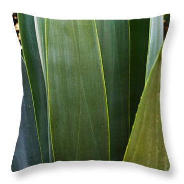 Close-up Of A Domestic Agave Plant Throw Pillow