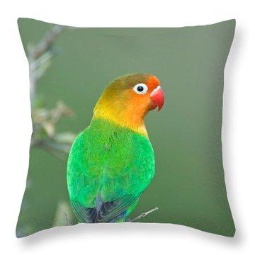 Close-up Of A Fischers Lovebird Throw Pillow