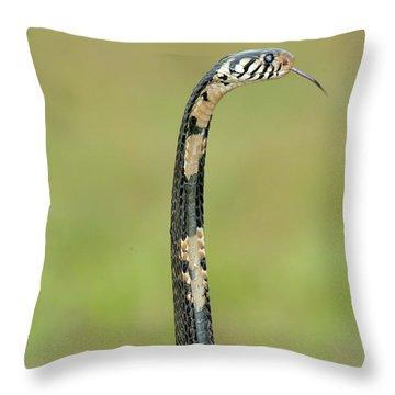 Close-up Of A Forest Cobra Naja Throw Pillow